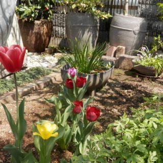 春の花が咲き乱れる。